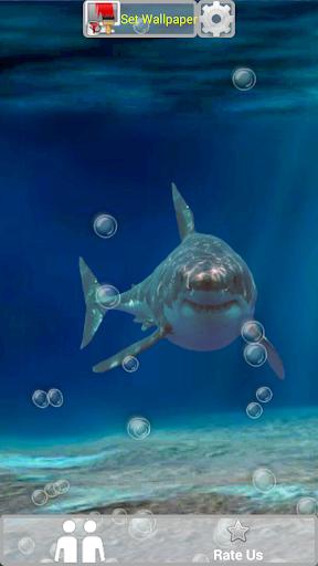 鲨鱼水下场景