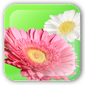 Flower Paint Live Wallpaper icon