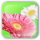 Flower Paint Live Wallpaper
