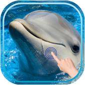 Magic Touch : Cute Dolphin