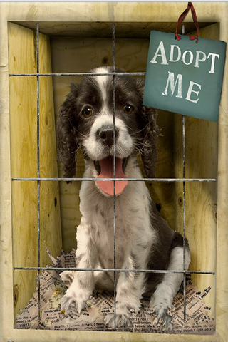 Dog Adoption Info