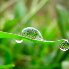 Through the drops by Shashikant More - Nature Up Close Water