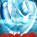 White Dove In Heart n Red Rose logo