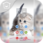 Cute Persian White Cat Theme