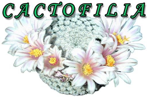 Cactofilia