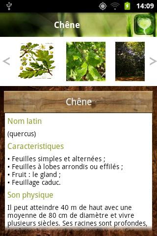 Bois Forêt - screenshot