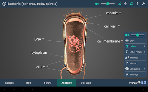 Bacteria VR 3D- screenshot thumbnail