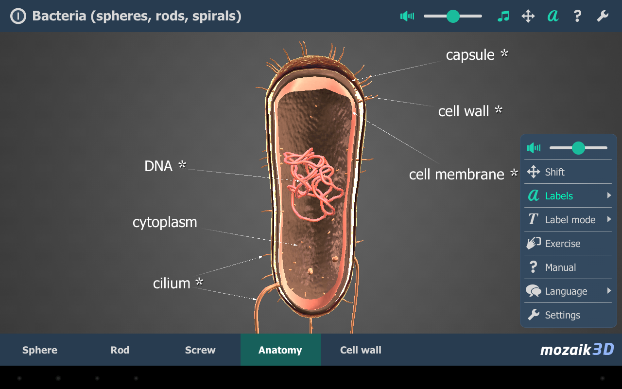 Bacteria VR 3D- screenshot