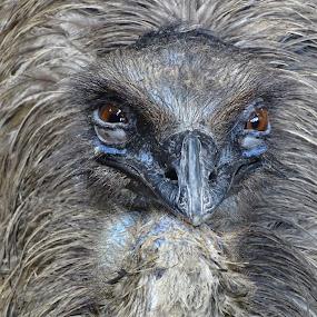 by Sumanta Thakur - Animals Birds