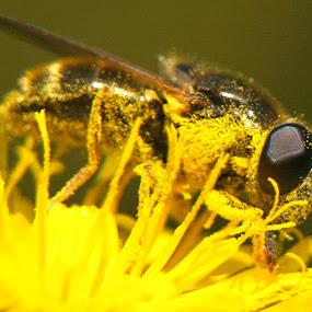 by Tomo Egredžija - Animals Insects & Spiders (  )