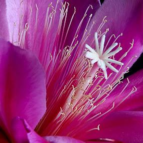 by Mario J - Flowers Single Flower ( center, light, flower, cactus )