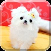 강아지노트 (애견수첩,강아지관리)