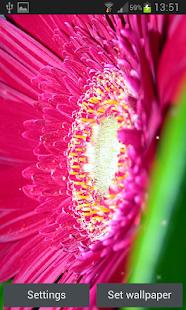 Třpytky Květiny Živé Tapety - náhled