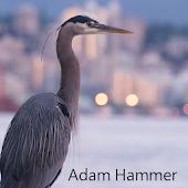 Adam Hammer - Portfolio