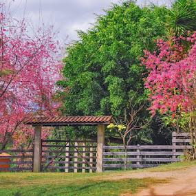 Caminho Das Flores by Brianna Oliva - Landscapes Mountains & Hills ( paisagens, flores, landscape, paisagem, flower )