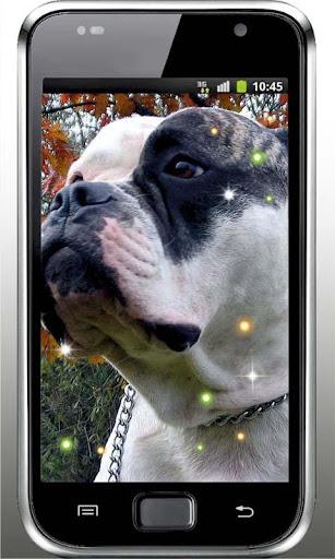 Dog Top 100 live wallpaper