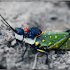 Ghost Grasshopper