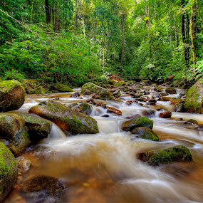 River In The Jungle by Johan Wan - Landscapes Waterscapes