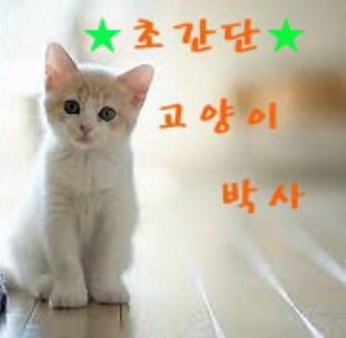 초간단 고양이 박사