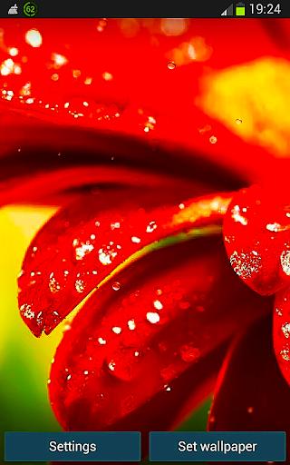 Galaxy Red Flower HD LWP