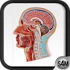 Atlas of Anatomy (Human) icon