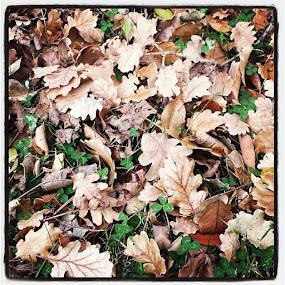 by Irna Hodžić - Nature Up Close Leaves & Grasses