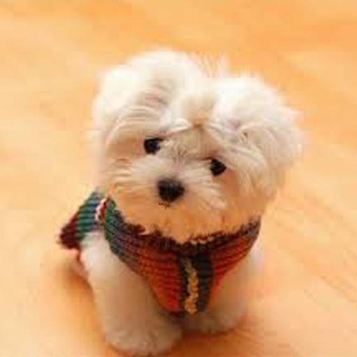 可愛的小狗壁紙 生活 App LOGO-APP試玩