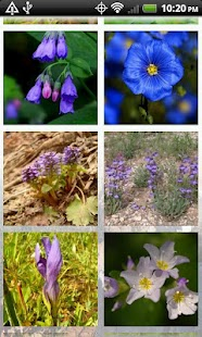 Wildflowers of Cedar Breaks- screenshot thumbnail