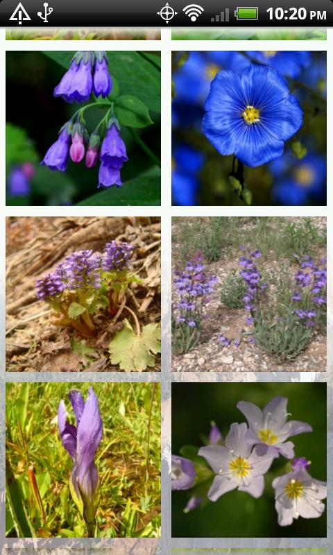 Wildflowers of Cedar Breaks- screenshot