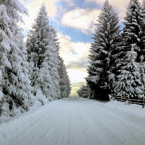 by Claudiu Petrisor - Landscapes Forests ( mountain, winter, forest, road,  )