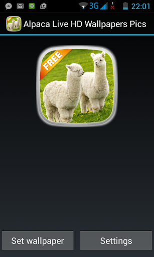 Alpaca Live HD Wallpapers Pics
