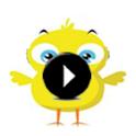 The Pio Chick