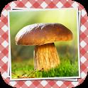 Pilze sammeln & bestimmen PRO icon