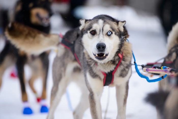 Iditarod Anchorage, Alaska