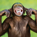 Talking Funny Monkey icon