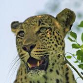 Kruger National Park Guide