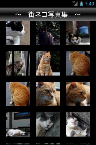 ネコ散歩 〜 街ネコの写真集 〜