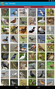 UK Birds Sounds Free- screenshot thumbnail