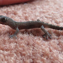 Marbled Gecko #2