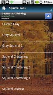 Squirrel Calls - screenshot thumbnail