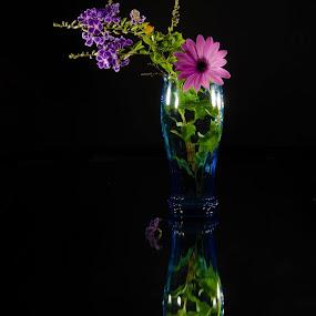 Sắc màu by Nguyen Cao Lam - Flowers Flower Arangements
