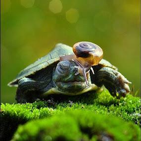 by Ahay Gart - Animals Amphibians