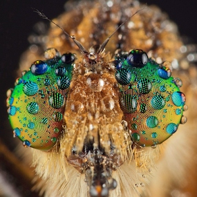 Colorful Facet.... by Vincent Sinaga - Animals Insects & Spiders