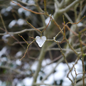 Lonely heart by Kathryn Johnson - Nature Up Close Other Natural Objects ( heart, cold, nature, ice, frozen )