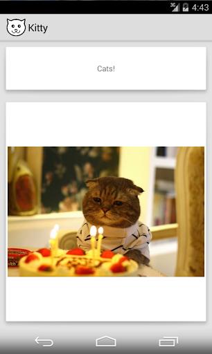 Kitty - random cat images