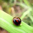 Variable Ladybug and Egg