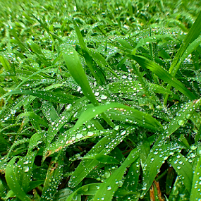 wet grass by Richard Wright - Instagram & Mobile iPhone ( grass, green, dew, rain, colorful, mood factory, vibrant, happiness, January, moods, emotions, inspiration,  )