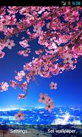 Screenshot of Sakura Live Wallpaper HD