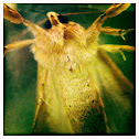 Fat Fuzzy Moth