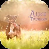 Alice-im-Fotoland